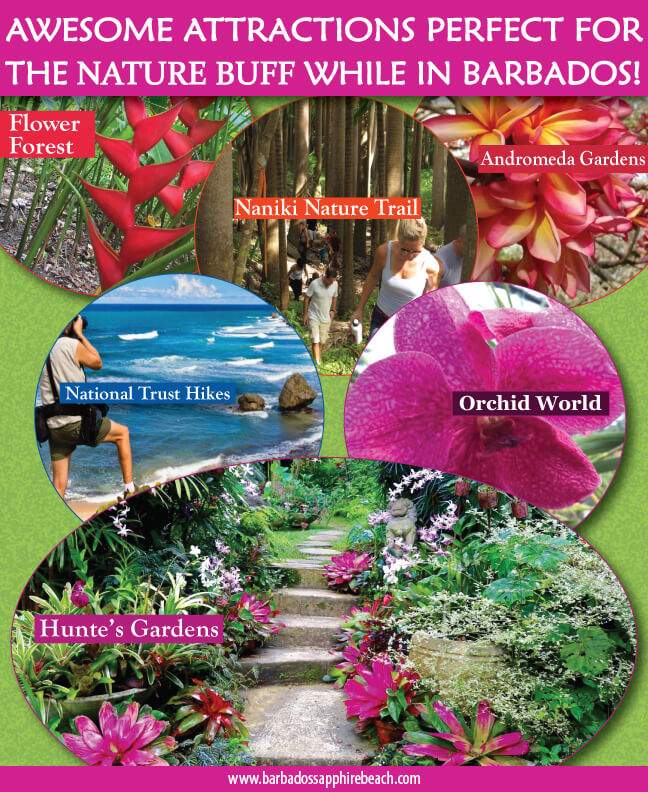 INFOGRAPHIC nature attractions in Barbados